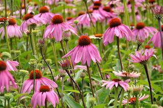 Las flores llenan de vida y alegría los jardines
