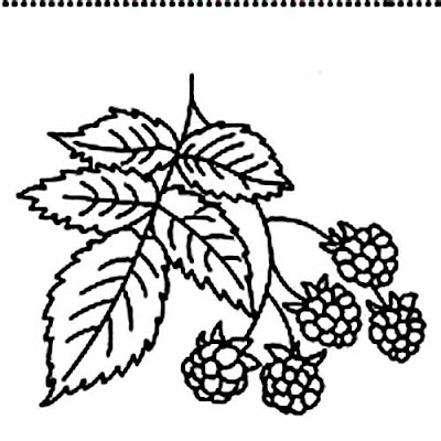 Free Raspberry Coloring Pages Pictures Free Raspberry From Kids