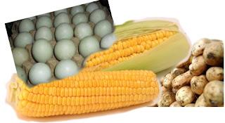 umpan ikan mas campuran jagung