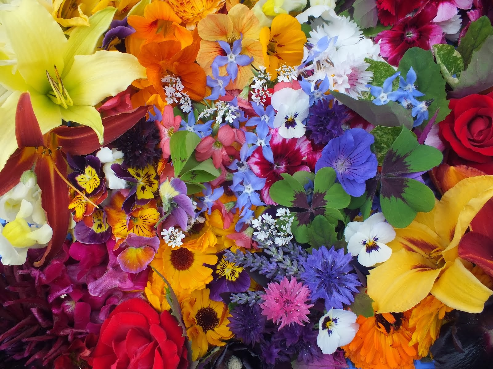 Click picture to buy edible flowers