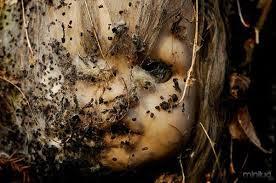 Vídeo com as 20 piores imagens bizarras assustadoras da ilha das bonecas