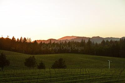 Beringer Bancroft Ranch