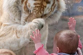 fetita tigru gradina
