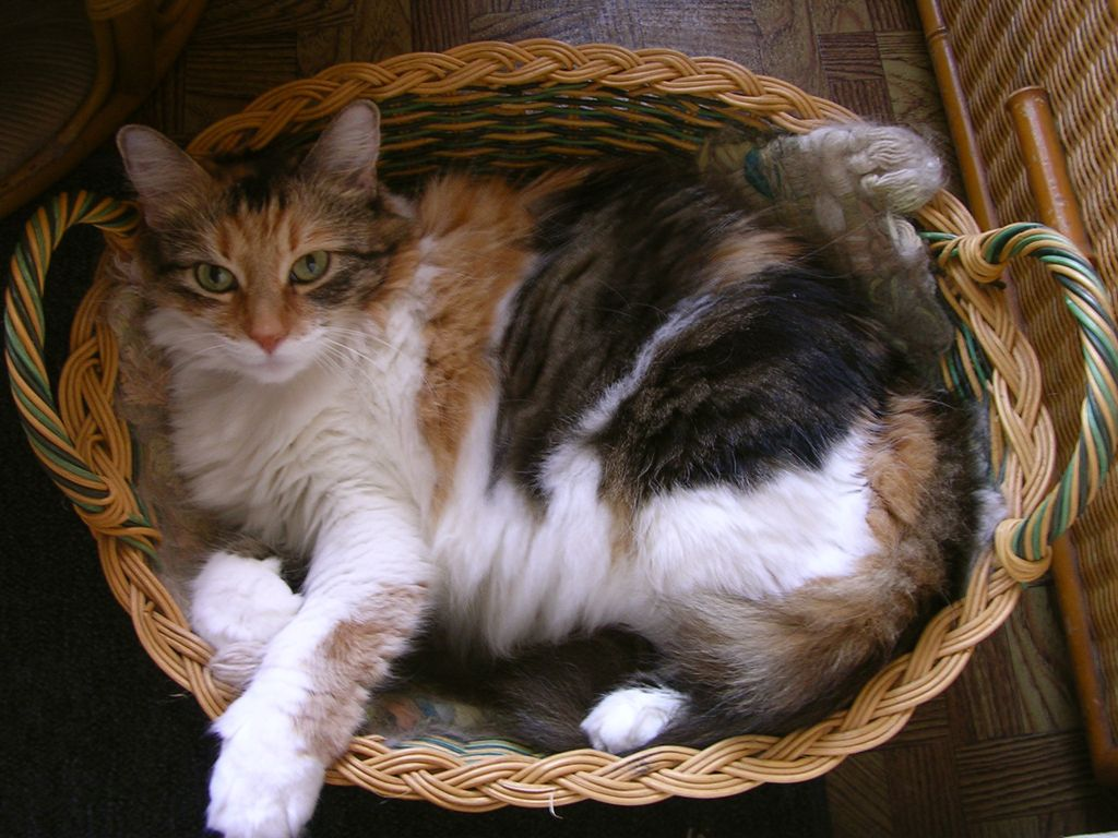 6. Cat in a basket by kvdprincess929