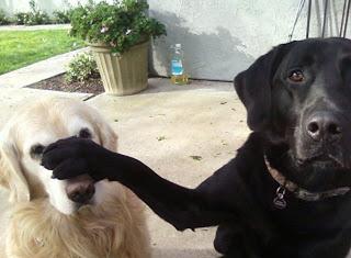 Imagenes Graciosas de Animales,Perros