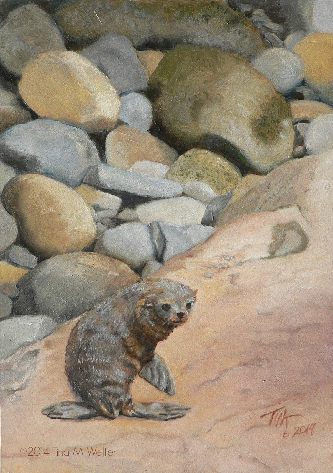 "Baby seal from the Kaikoura coast, New Zealand.  Small oil painting by Tina M Welter ""On the Rocks"" 7""x 5"" oil on Gessobord ©2014"