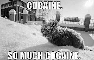 cat, cocaine so much cocaine