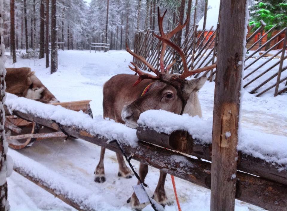 Lapland 2014 - Where do I start?