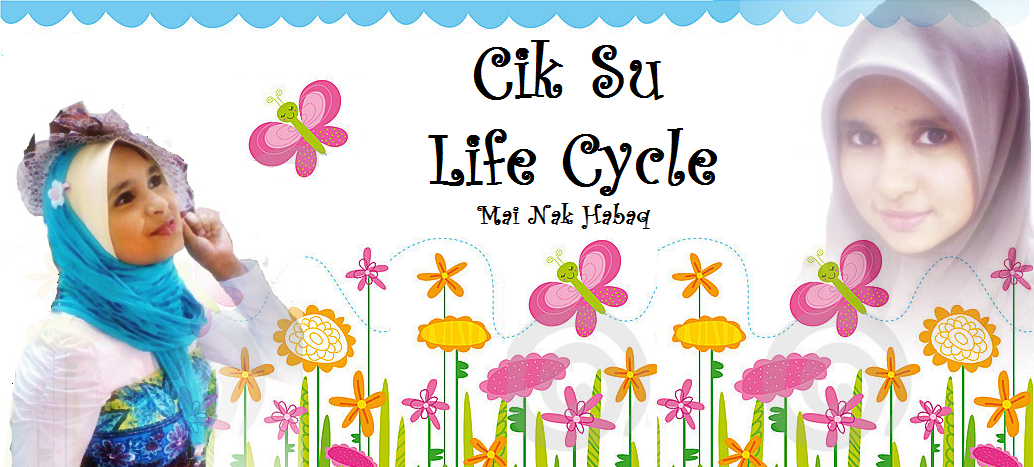Cik Su Life Cycle
