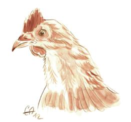 poulet de Doux