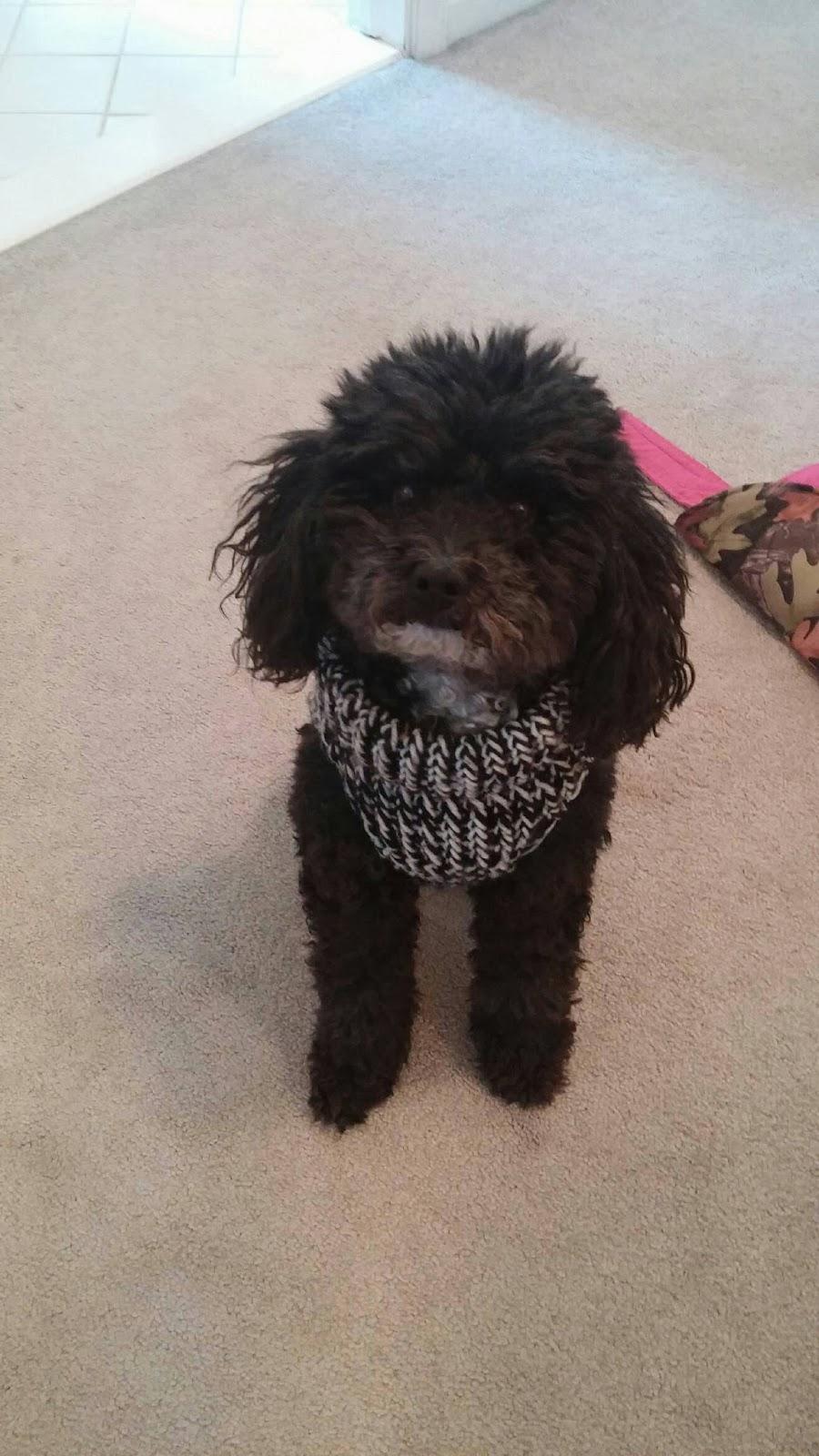 Knitting A Dog Sweater : Corky crafts knit hats loom knitting a dog sweater