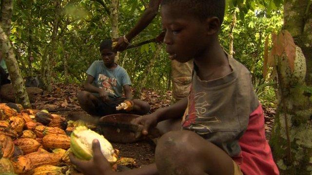 Nestlé é processada por usar escravos em colheitas de cacau