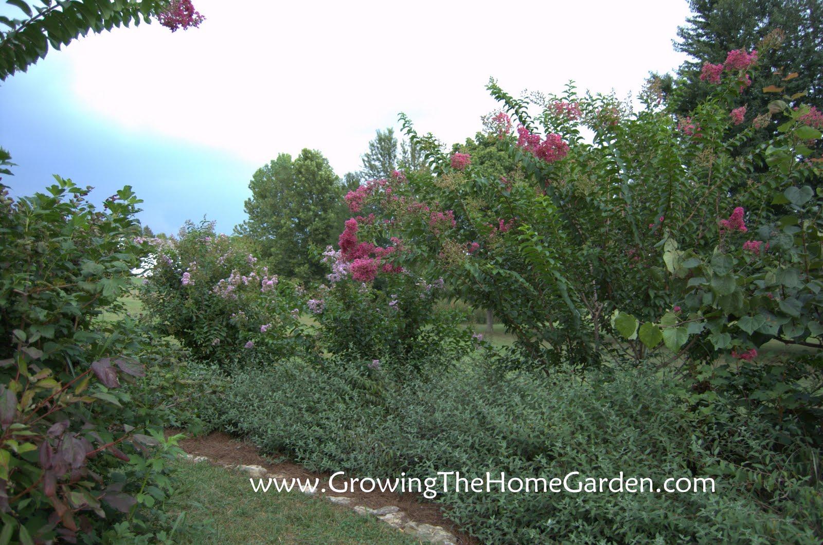 The Crape Myrtle Border - Growing The Home Garden