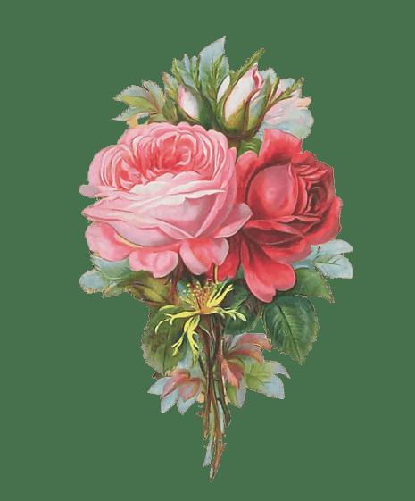 ZOOM DISEÑO Y FOTOGRAFIA: 30 rosas vintage para scrap