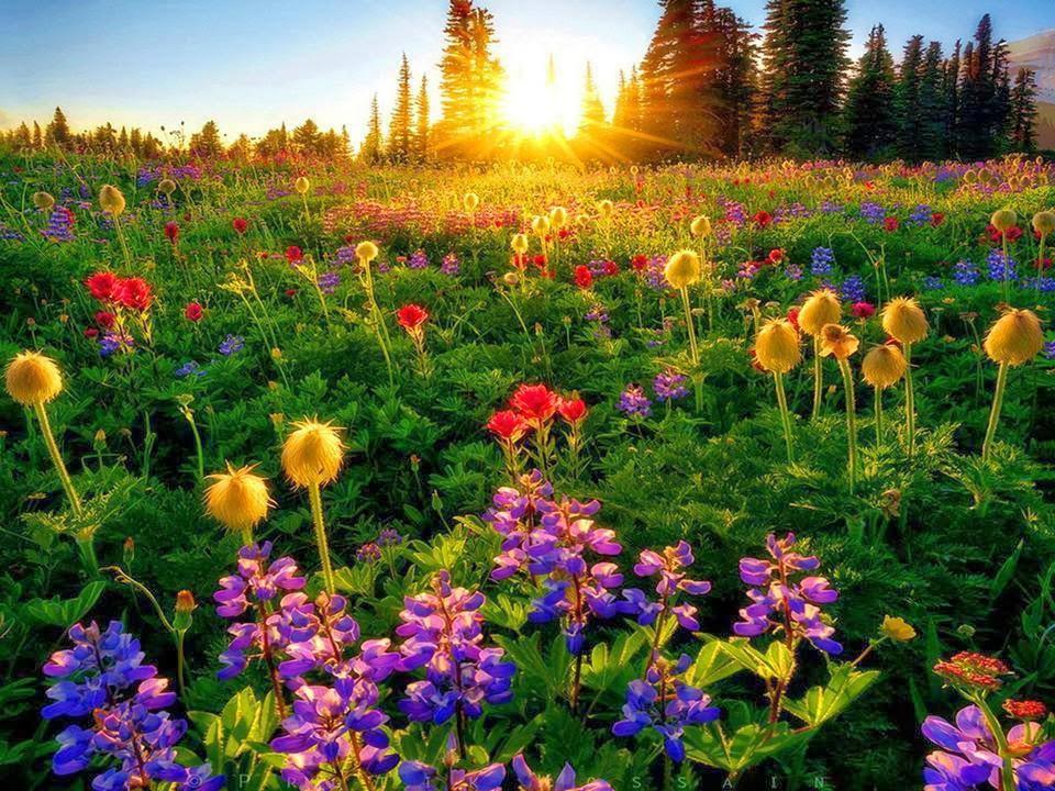 Precioso paisaje con flores y el amanecer al fondo