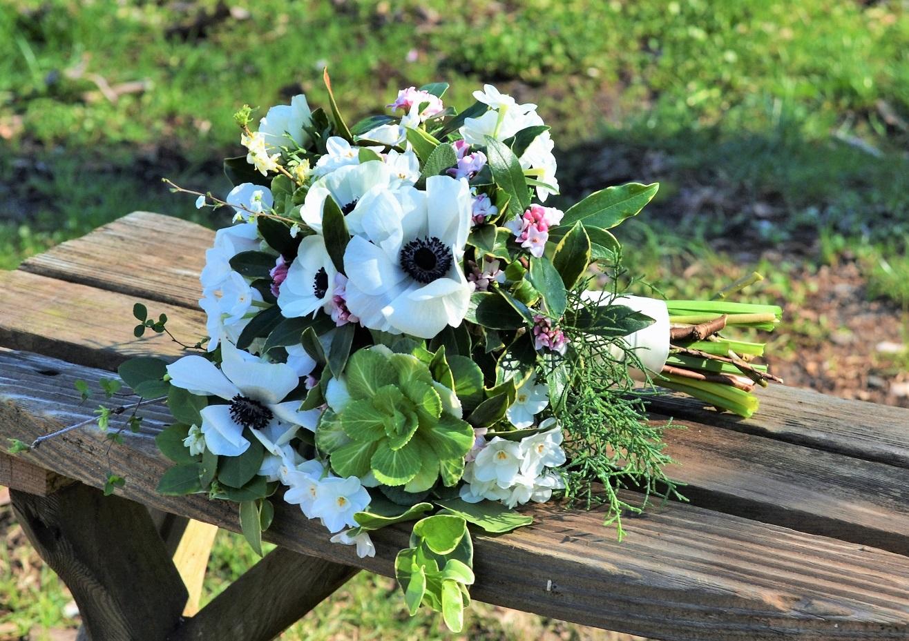 Springwell Gardens Blog