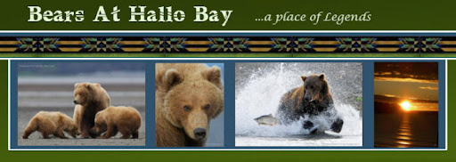 Bears at Hallo Bay
