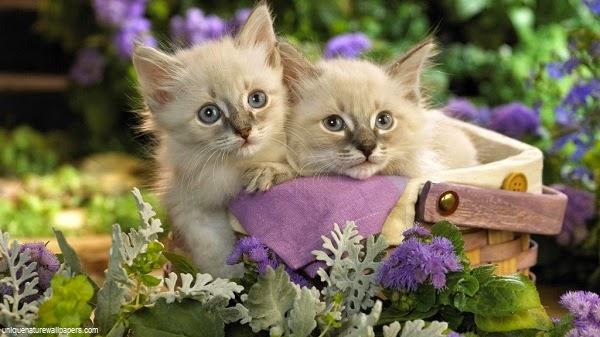 Des belles Photos de Chats