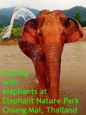 Travel the World: Spend a day at Chiang Mai's Elephant Nature Park in Thailand, a place that rescues and provides sanctuary to neglected, abused, and abandoned elephants.