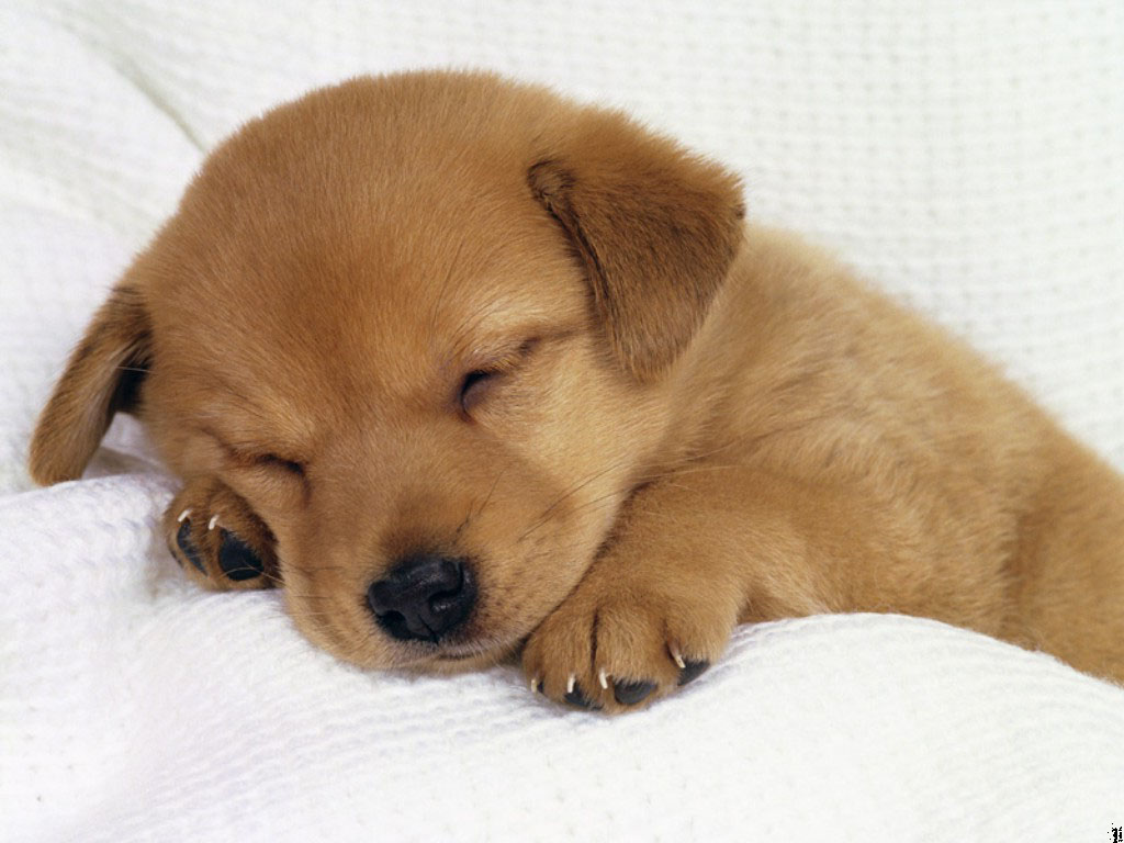 cute puppy picture - photo #6