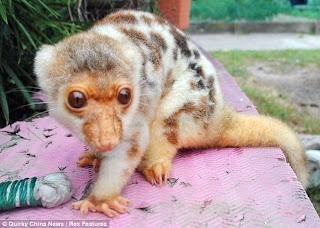 صورة حيوان مجهول الهوية!