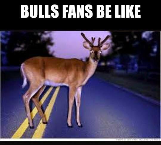 bulls fans be like #bullshaters #bulls #deer #road