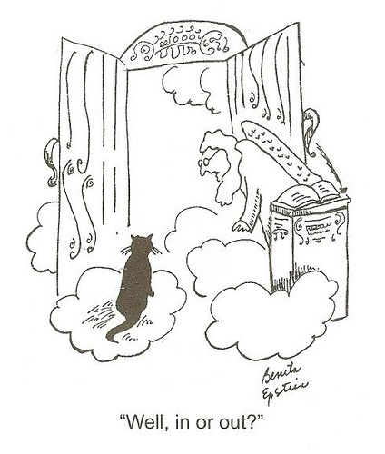 cat at pearly gate undecided about going in