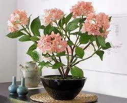 tenemos una gran variedad de hojas y flores para poder combinar con el mobiliario y los colores de las de la casa