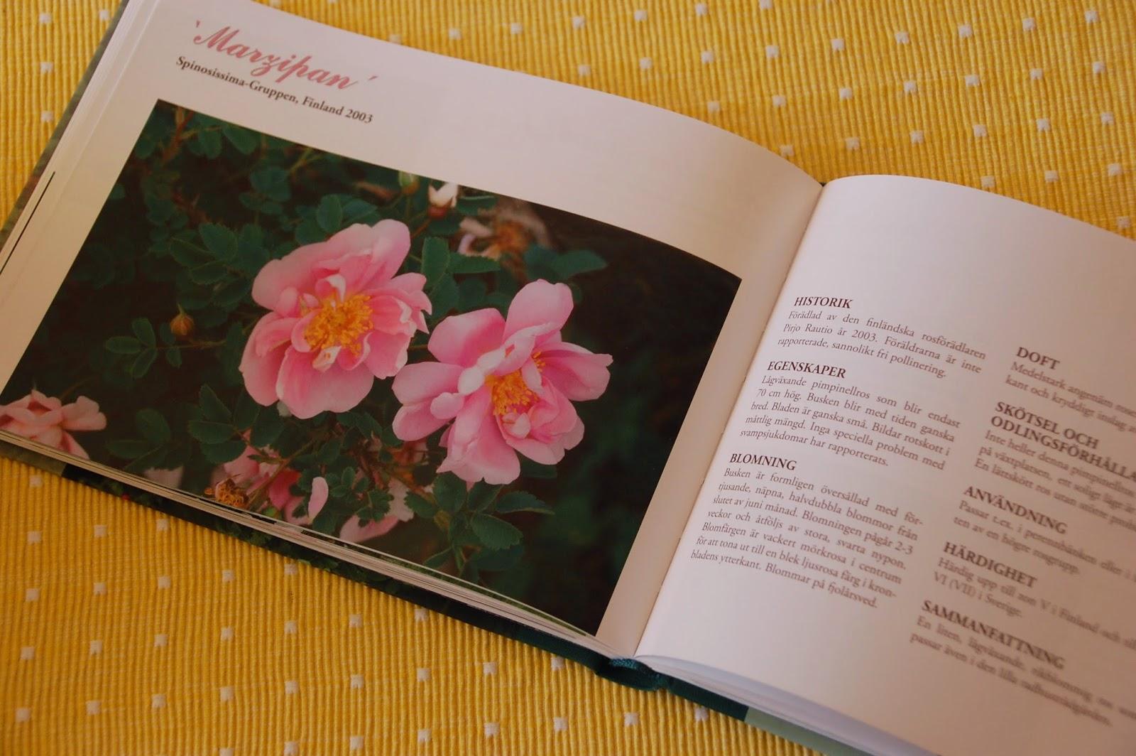Svanå trädgård: rosor i norr.