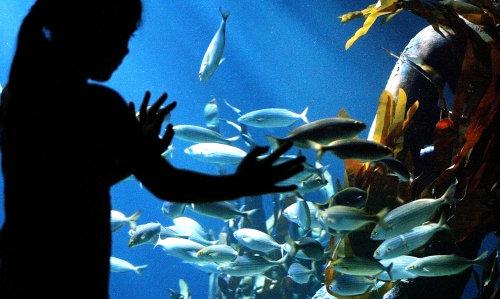 AquaDom, o aquário gigante em um Hotel de Berlim