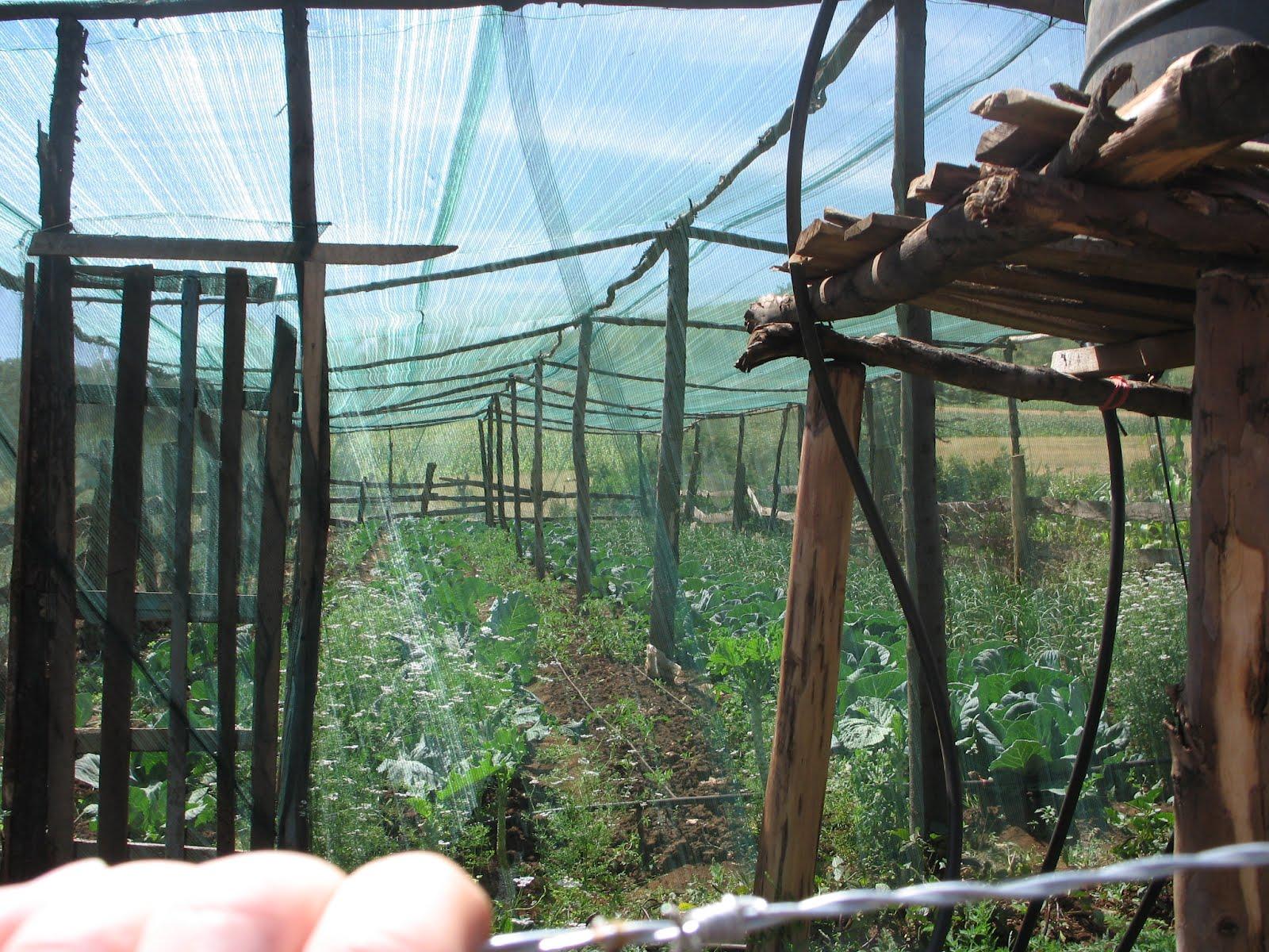 Farmers Helping Farmers: Kenya 2012: Screenhouse kitchen ...