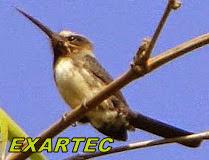 EXARTEC