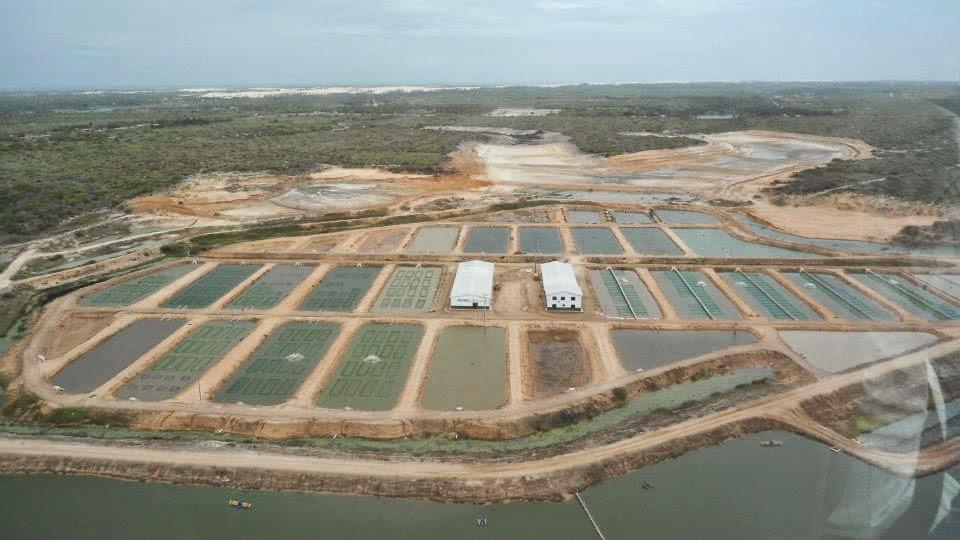 Cria peixe tilapicultura aquabel o nome da til pia for Tanques para cria de tilapia