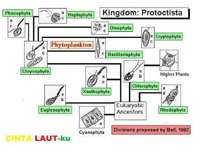 rantai jaringan plankton
