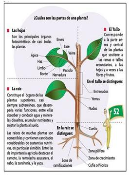 Fisiologia vegetal septiembre 2012 for Hormonas en las plantas