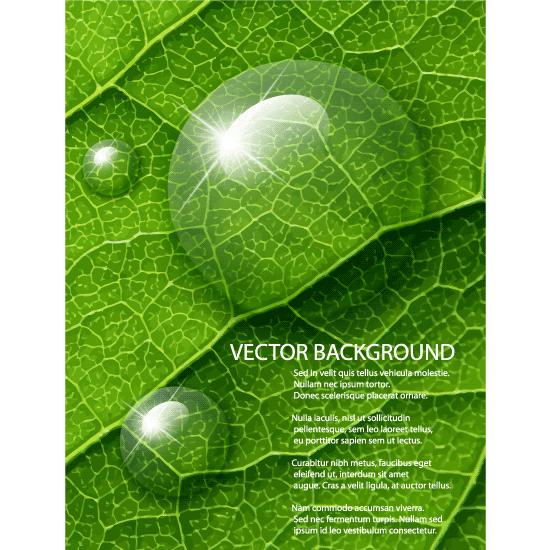 Fondo de hoja con rocío - Vector