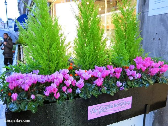 Composiciones de plantas para jardineras en invierno - Plantas jardineras exterior ...
