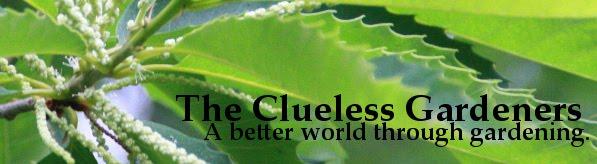 The Clueless Gardeners - A Garden Blog