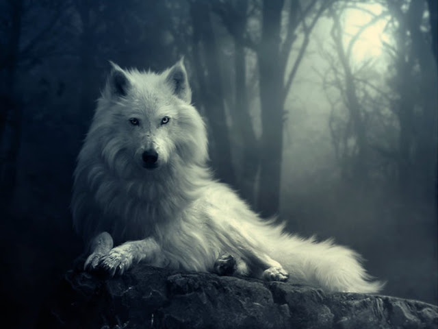 View topic - Howling At The Moon *Wolf pack RP* NOW ...