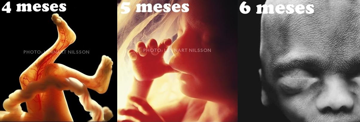 Entre fotos e beijos o segundo trimestre de gesta o - Feto de 4 meses fotos ...