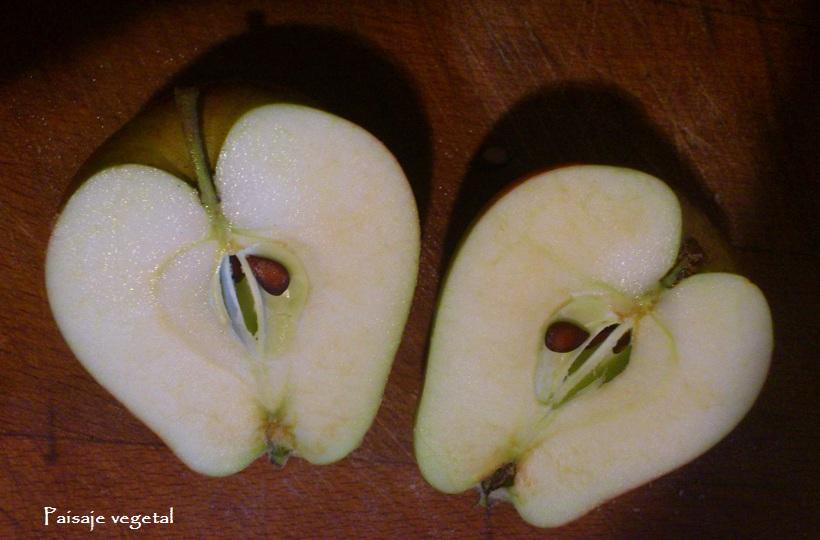 Paisaje vegetal: octubre 2012