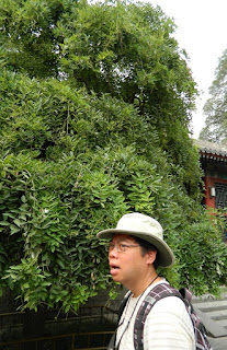 paul jung sweltering at summer palace china july 2012 by garden muses: a Toronto gardening blog
