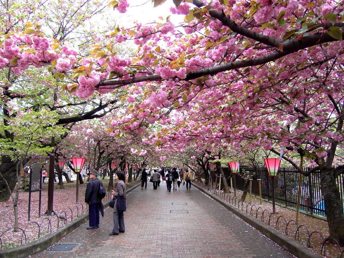 Osaka-Cherry-Blossom-Walk_2010