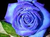 flores, plantas de interior
