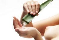 Benefits of aloe vera for cancer drug