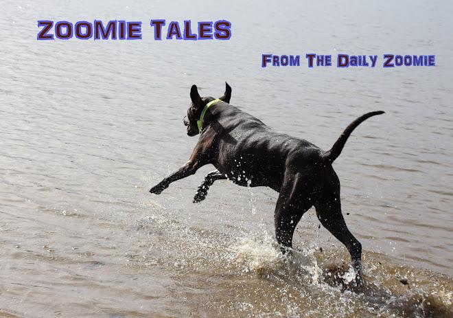 Zoomie Tales!