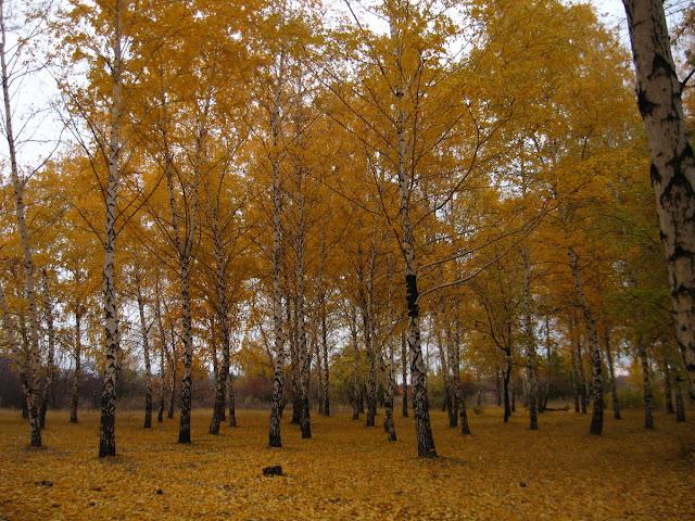 Парк в Першотравенске