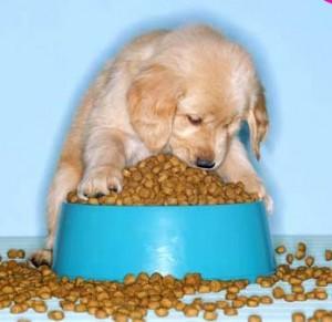 Comida-canina