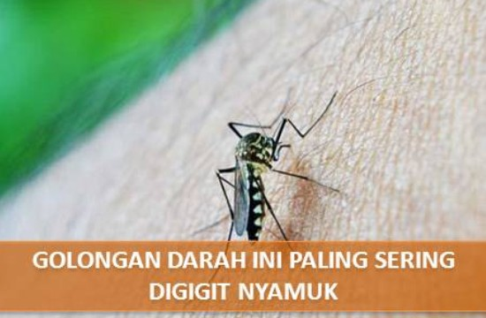 Golongan Darah Ini Paling Sering Digigit Nyamuk