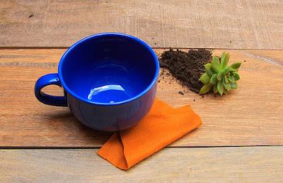 A hora mais esperada: transplantar a sua planta :-)